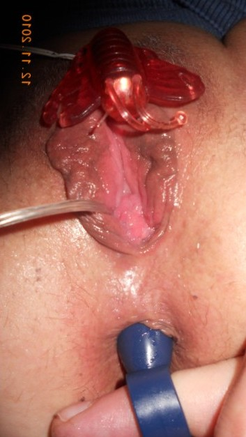 toy and anal plug